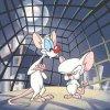 Pinky y Cerebro - Son Pinky y Cerebro